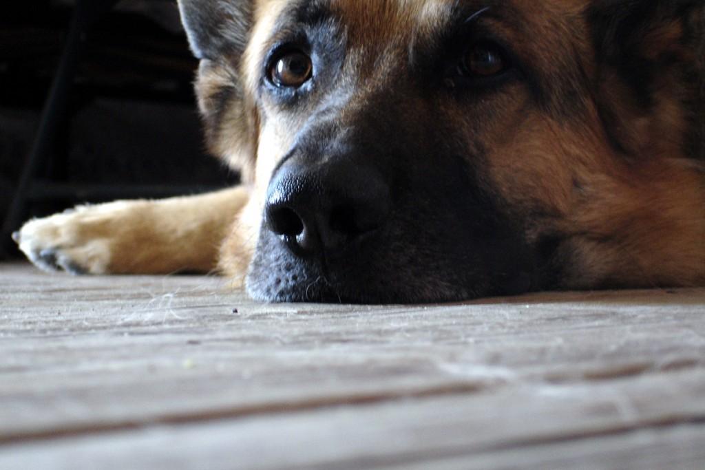 lazy-dog-1408729-1279x852
