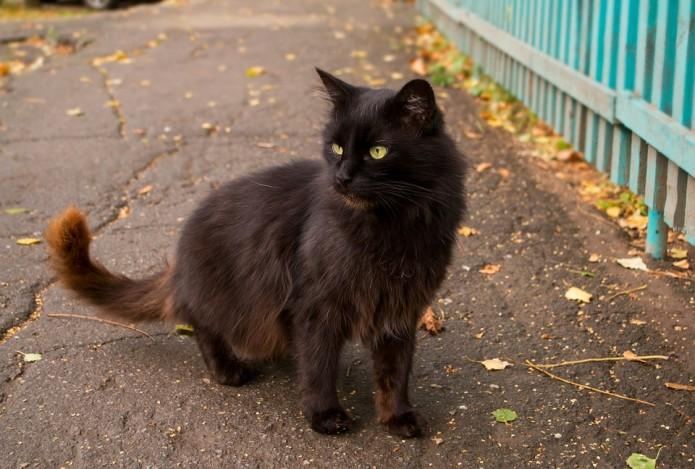 Benamės katės yra pagrindinės blusų platintojos.