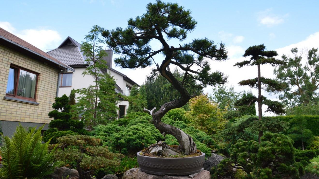 """""""Visi medžiai lenkiasi žmogui"""", – sako K. Ptakauskas."""